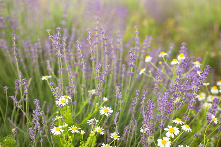 fleurs-copie.jpg